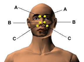 bridge of the nose